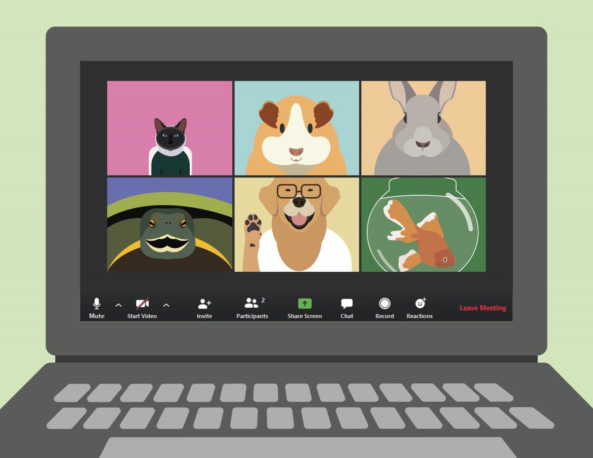 Virtual meeting of pets