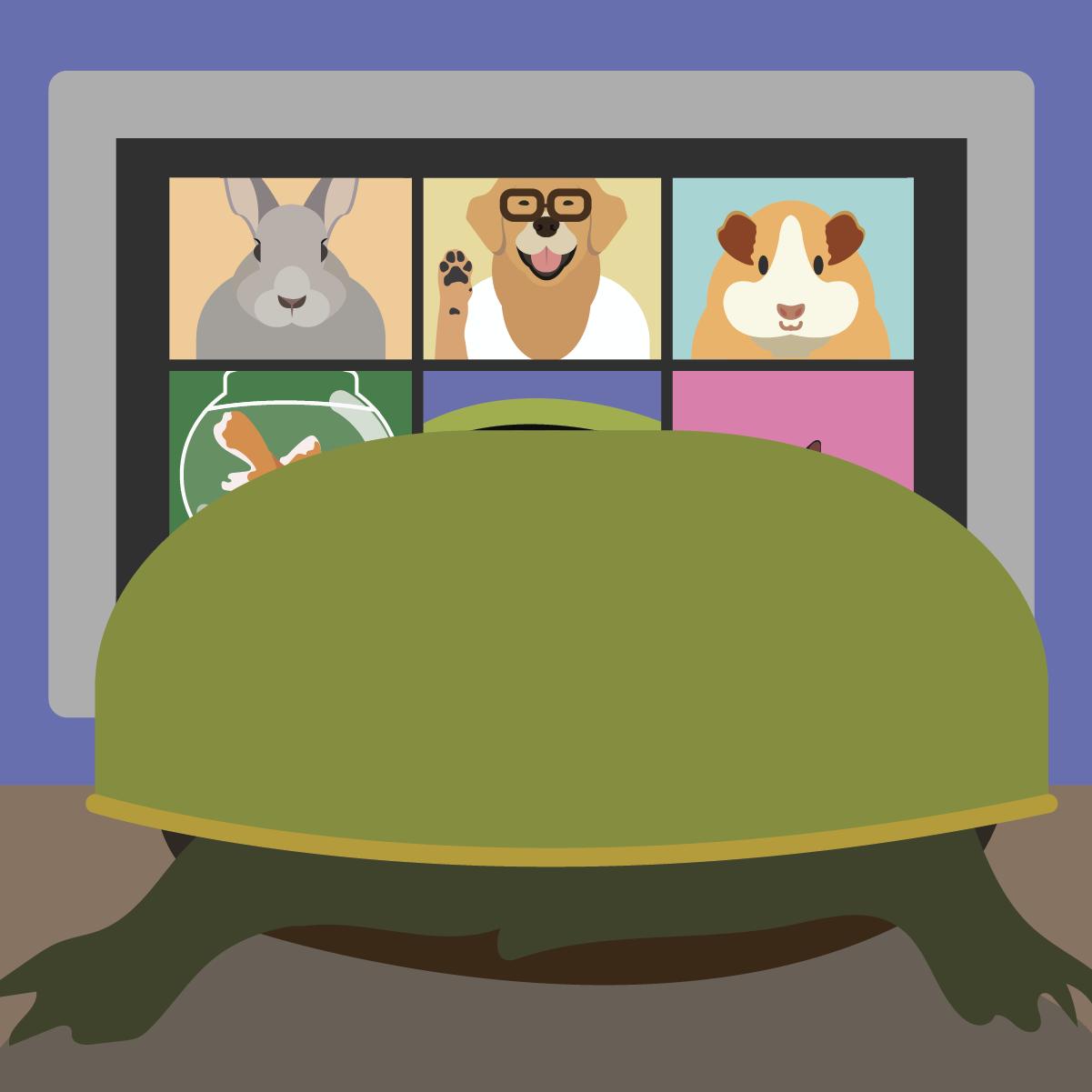 Tortoise hosts virtual meeting